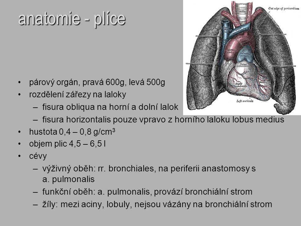 anatomie - plíce fisura obliqua na horní a dolní lalok