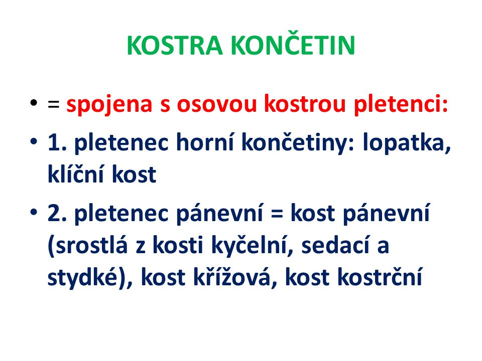 KOSTRA KONČETIN = spojena s osovou kostrou pletenci: