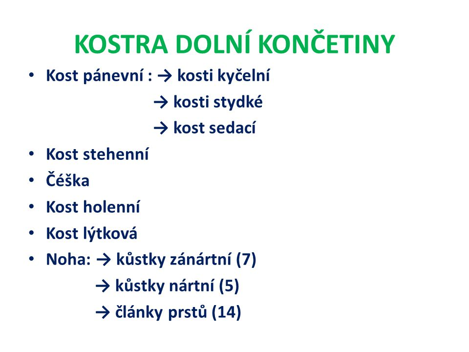 KOSTRA DOLNÍ KONČETINY