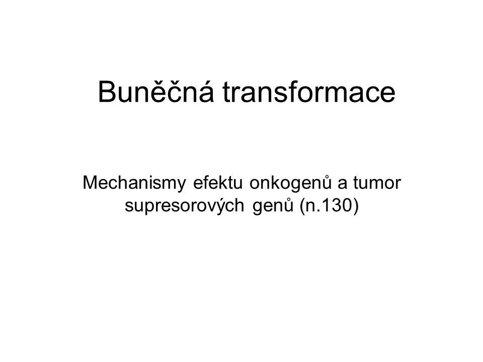 Mechanismy efektu onkogenů a tumor supresorových genů (n.130)