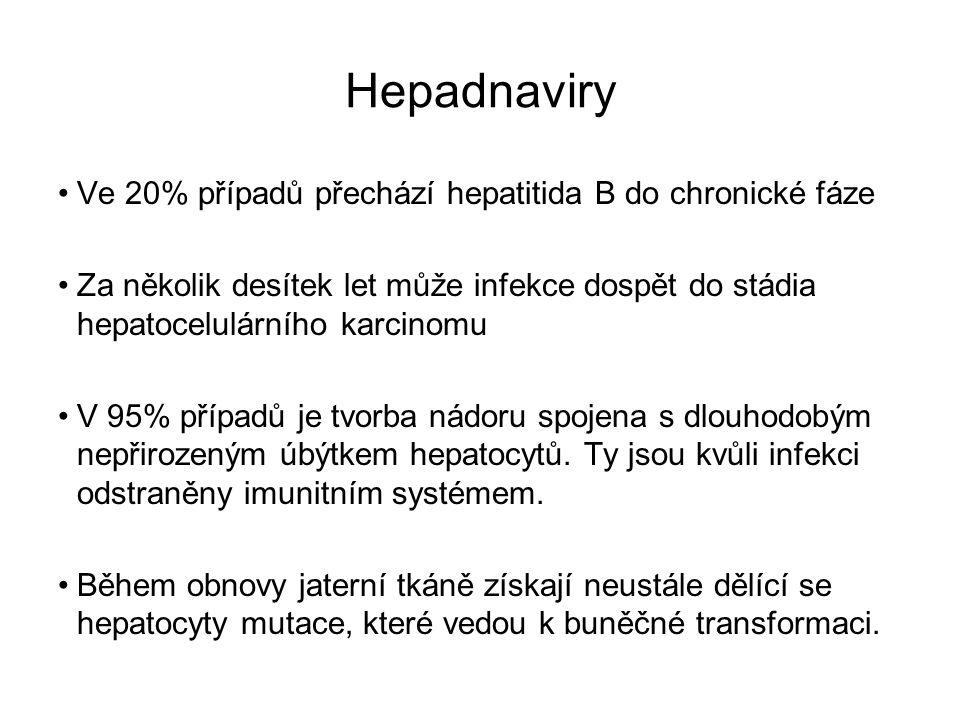 Hepadnaviry Ve 20% případů přechází hepatitida B do chronické fáze
