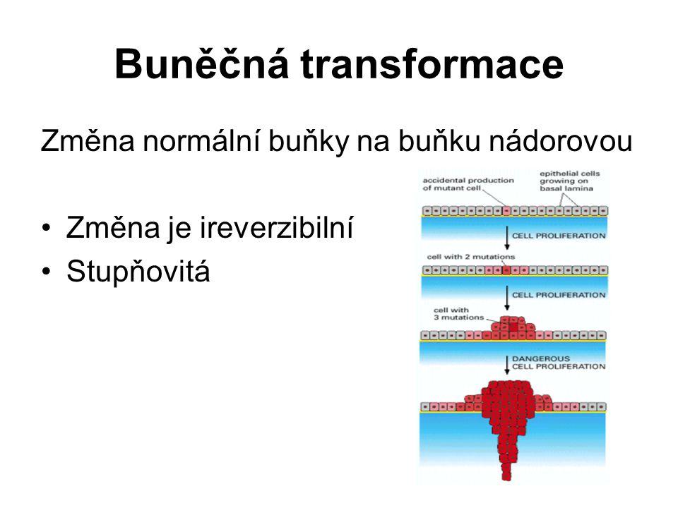 Buněčná transformace Změna normální buňky na buňku nádorovou