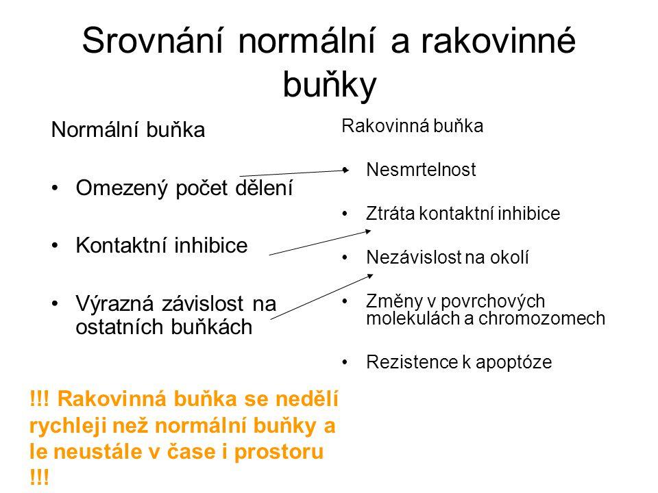 Srovnání normální a rakovinné buňky