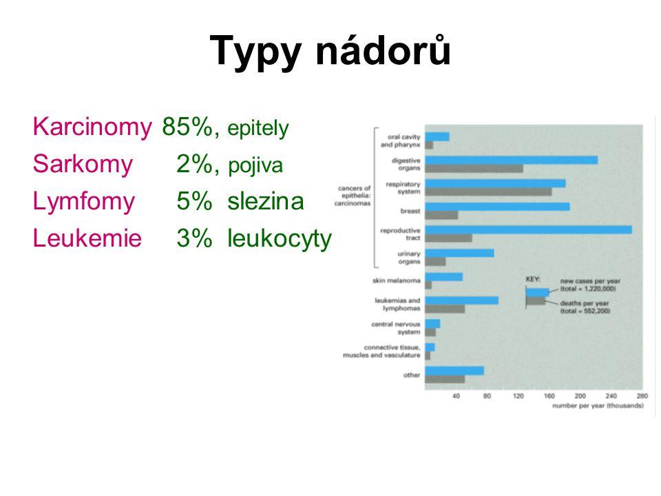 Typy nádorů Karcinomy 85%, epitely Sarkomy 2%, pojiva