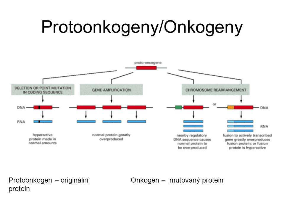 Protoonkogeny/Onkogeny