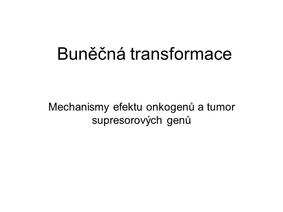 Mechanismy efektu onkogenů a tumor supresorových genů