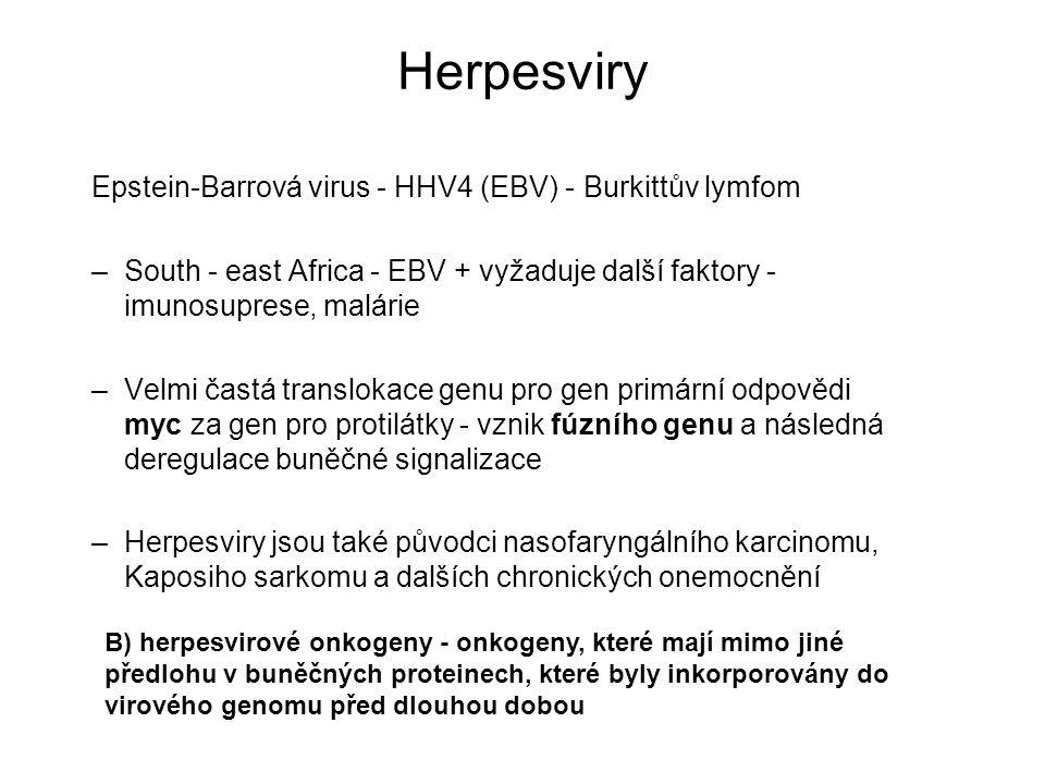 Herpesviry Epstein-Barrová virus - HHV4 (EBV) - Burkittův lymfom