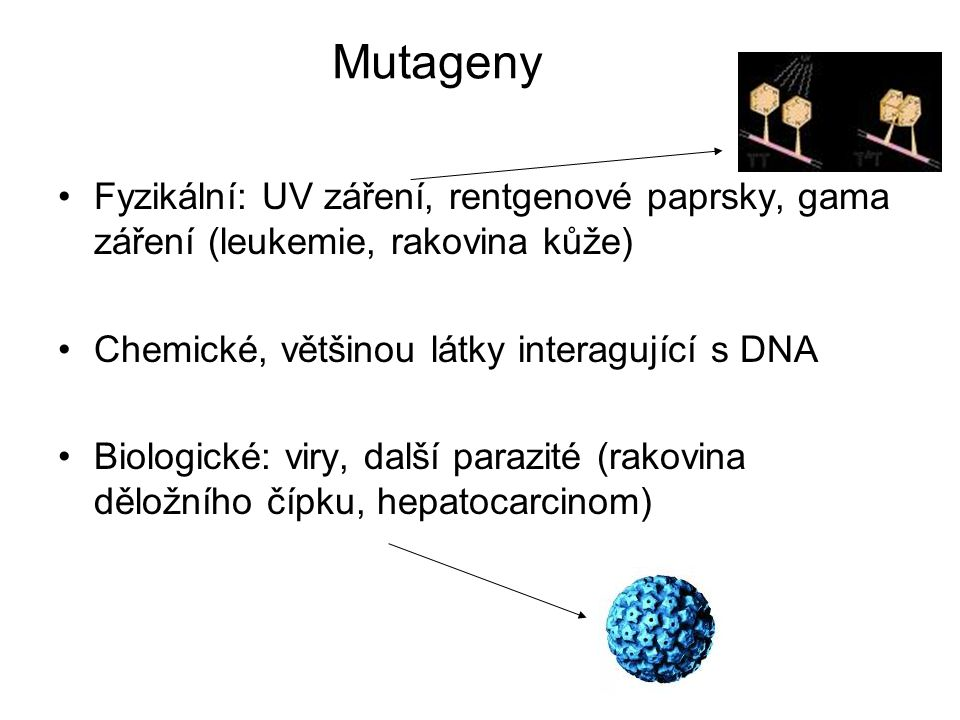 Mutageny Fyzikální: UV záření, rentgenové paprsky, gama záření (leukemie, rakovina kůže) Chemické, většinou látky interagující s DNA.