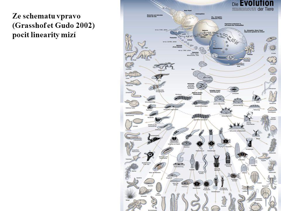 Ze schematu vpravo (Grasshof et Gudo 2002) pocit linearity mizí