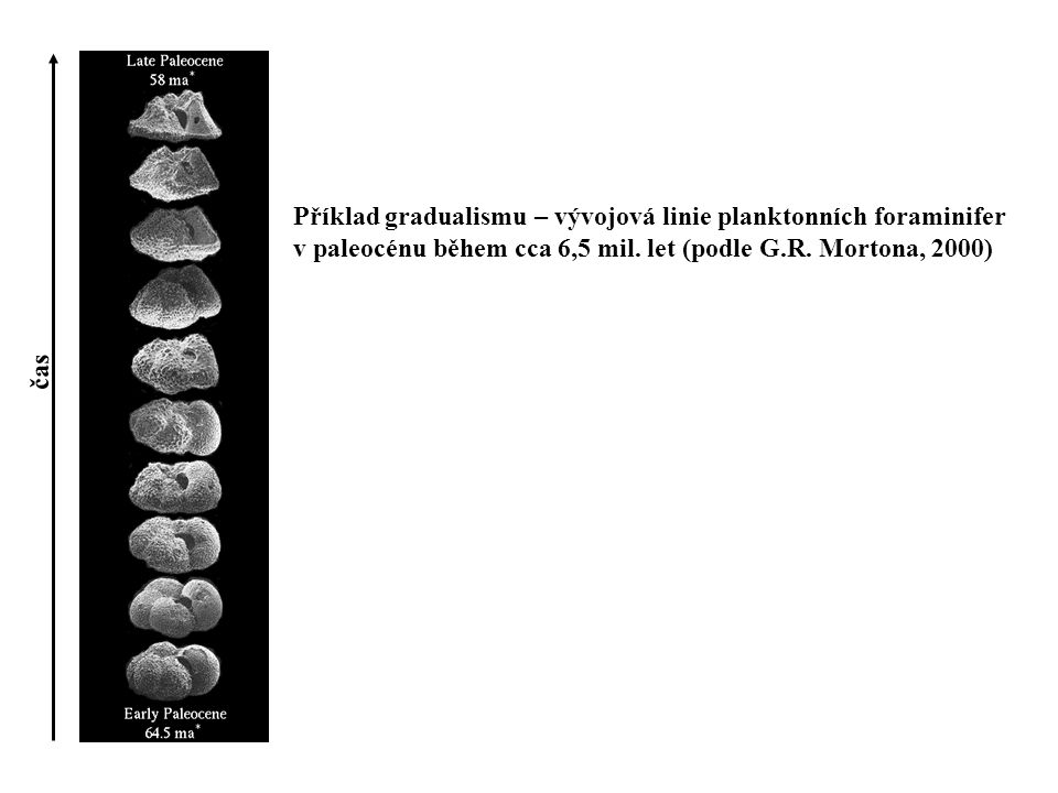 Příklad gradualismu – vývojová linie planktonních foraminifer