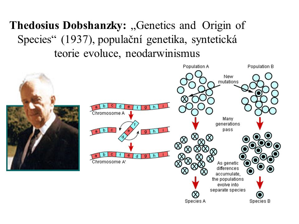 "Thedosius Dobshanzky: ""Genetics and Origin of Species (1937), populační genetika, syntetická teorie evoluce, neodarwinismus"