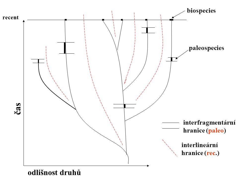 čas odlišnost druhů biospecies paleospecies interfragmentární