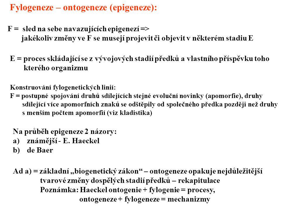 Fylogeneze – ontogeneze (epigeneze):