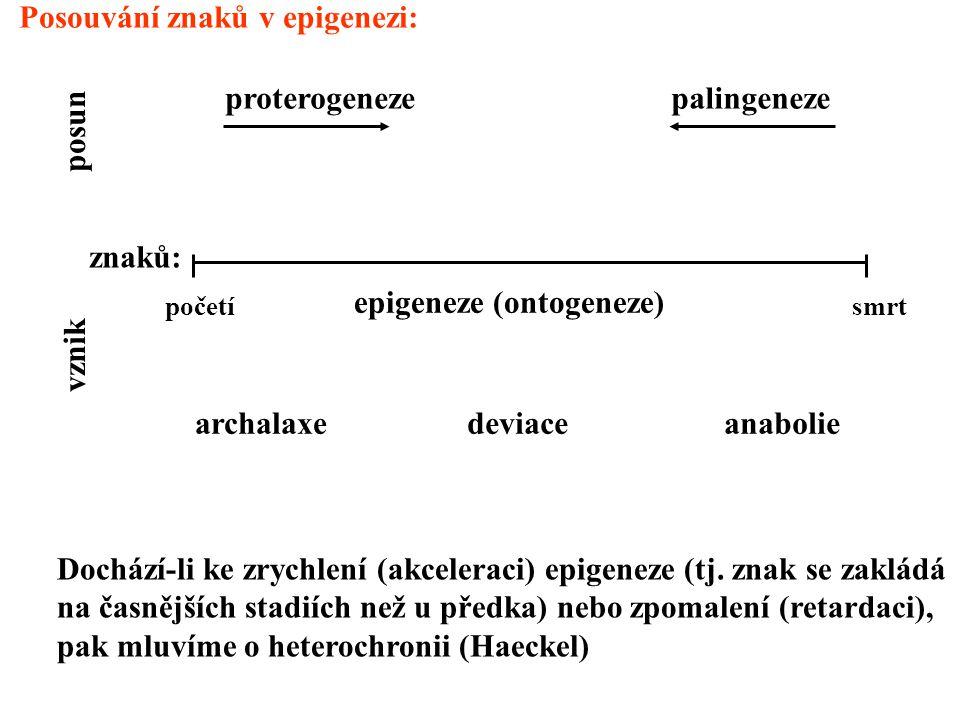 Posouvání znaků v epigenezi: