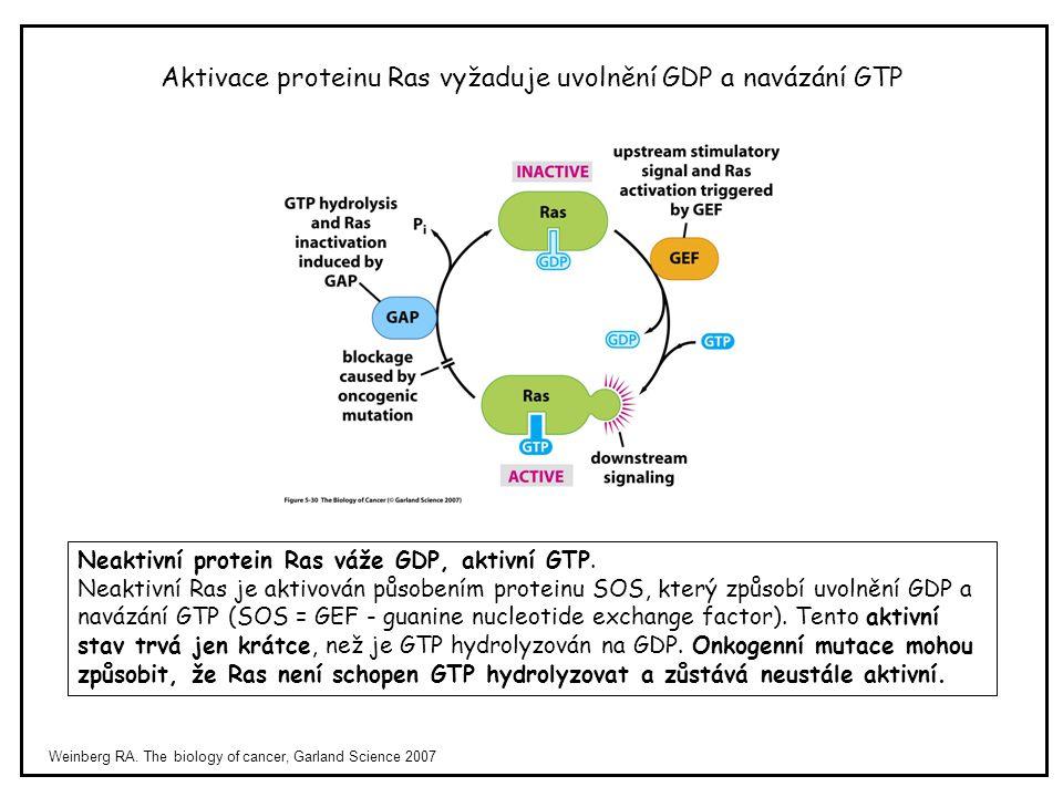 Aktivace proteinu Ras vyžaduje uvolnění GDP a navázání GTP