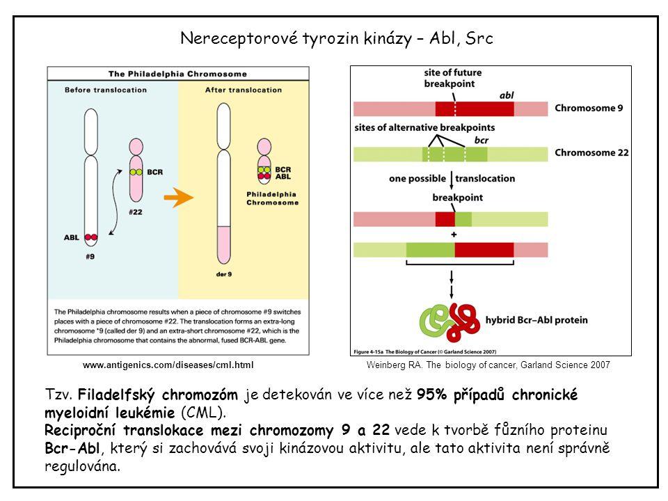 Nereceptorové tyrozin kinázy – Abl, Src