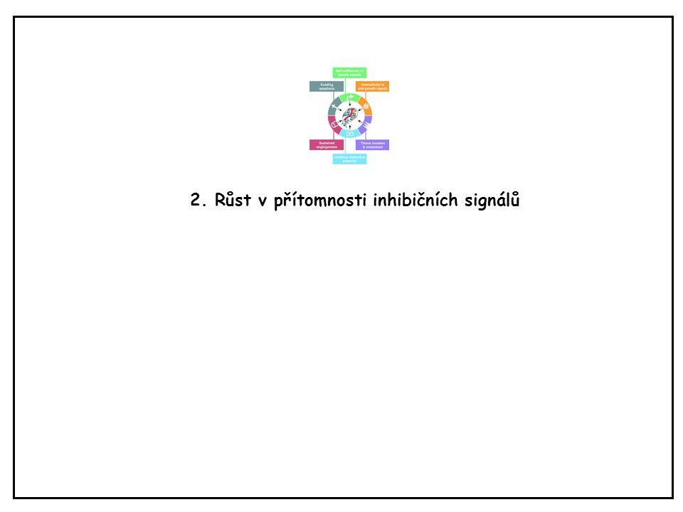 2. Růst v přítomnosti inhibičních signálů