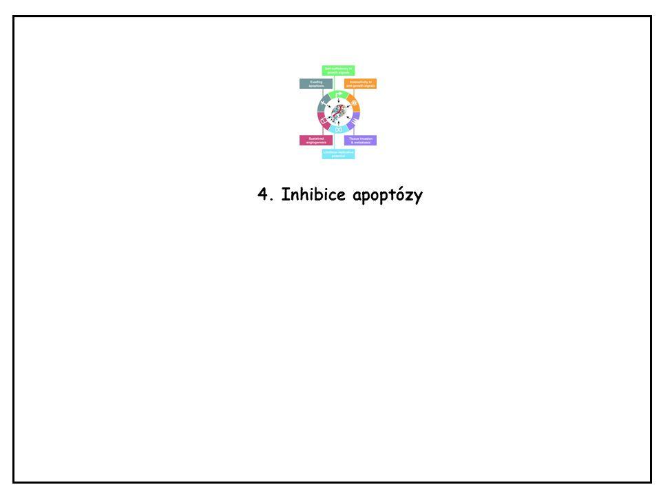 4. Inhibice apoptózy