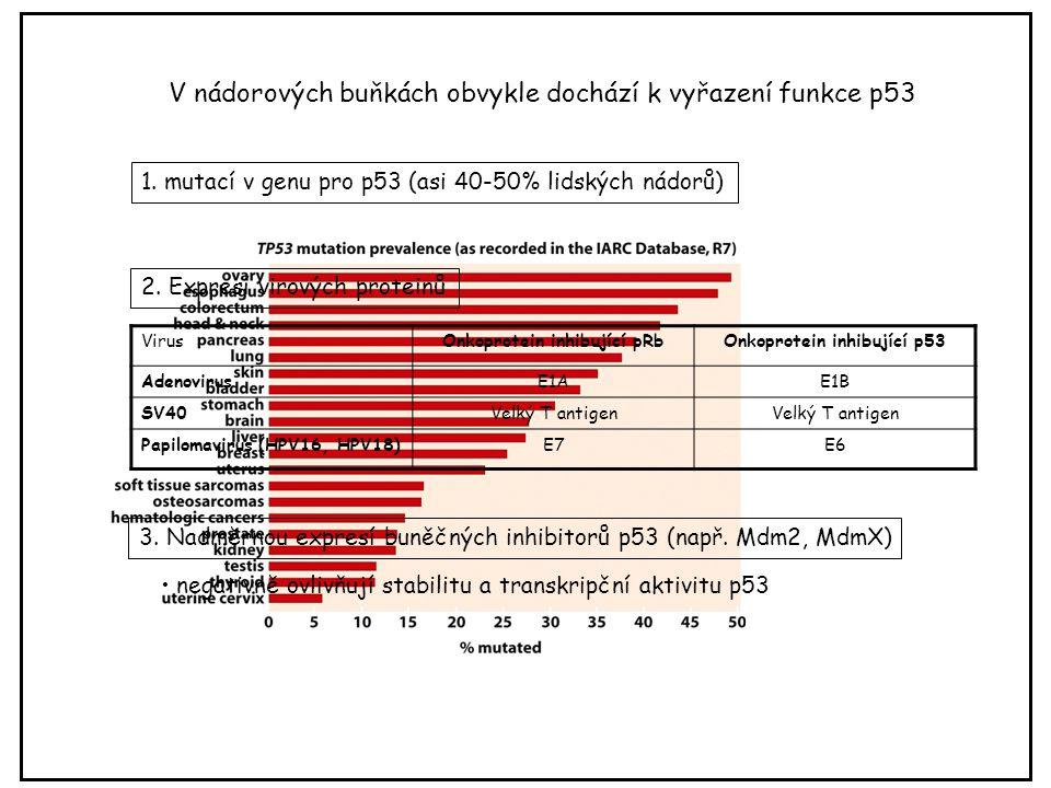 Onkoprotein inhibující pRb Onkoprotein inhibující p53