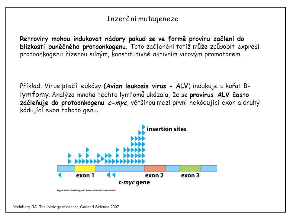Inzerční mutageneze