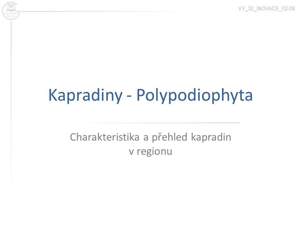 Kapradiny - Polypodiophyta