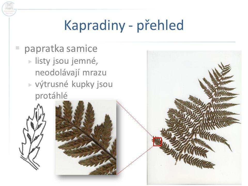 Kapradiny - přehled papratka samice