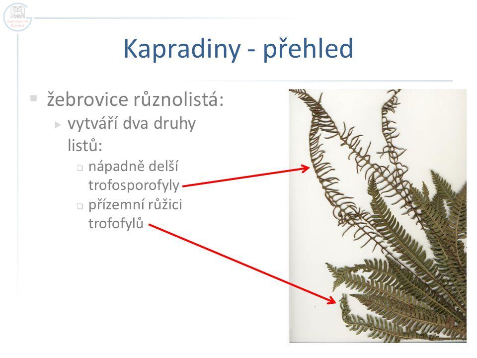 Kapradiny - přehled žebrovice různolistá: vytváří dva druhy listů:
