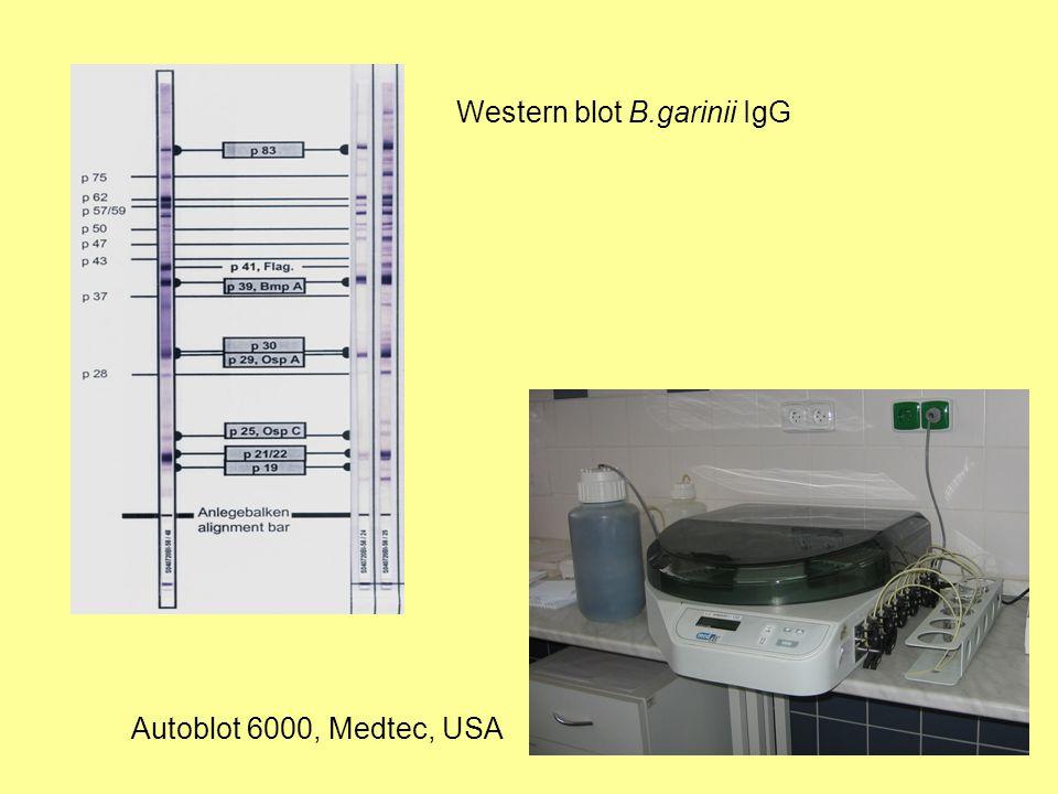 Western blot B.garinii IgG