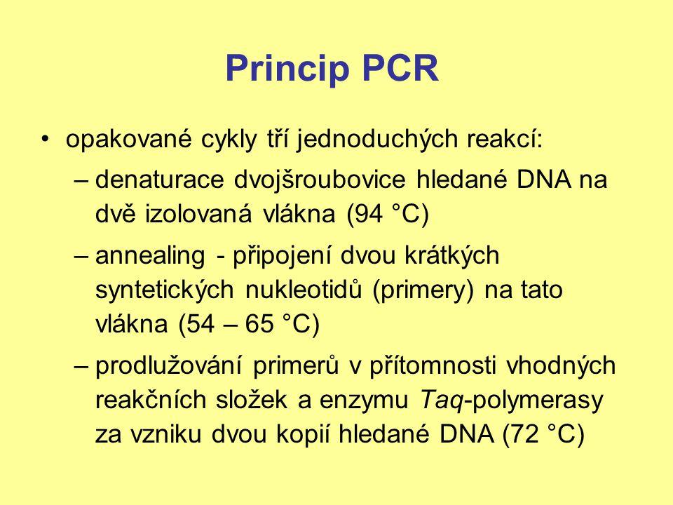 Princip PCR opakované cykly tří jednoduchých reakcí: