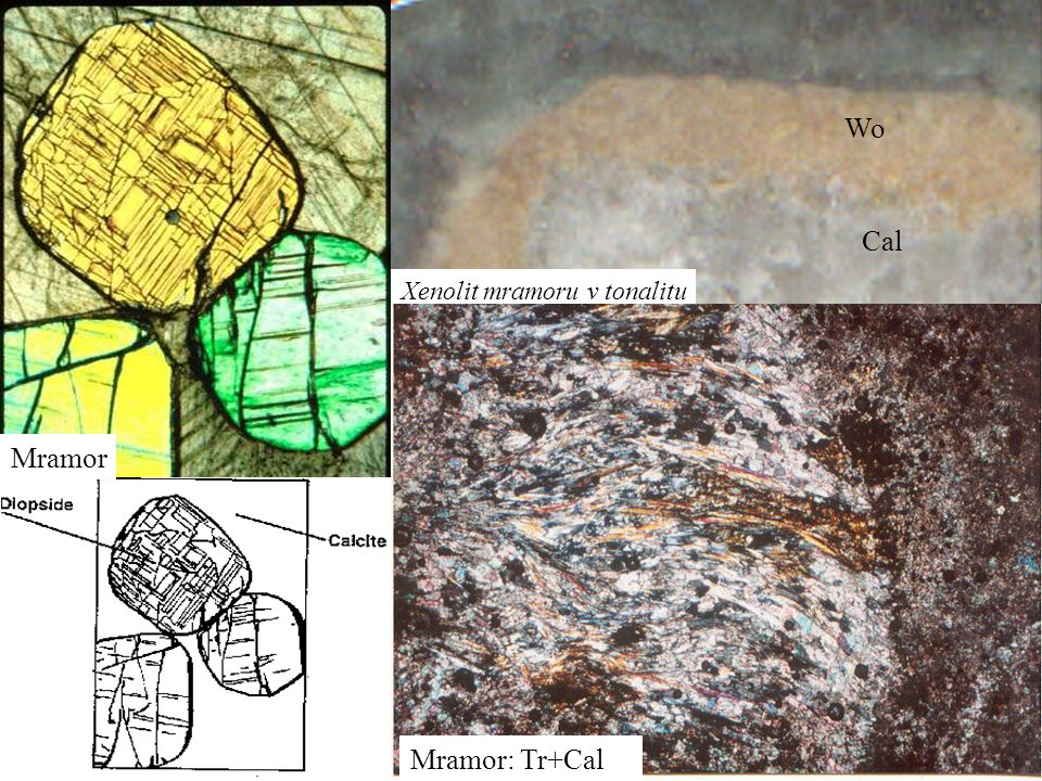 Wo Cal Xenolit mramoru v tonalitu Mramor Mramor: Tr+Cal