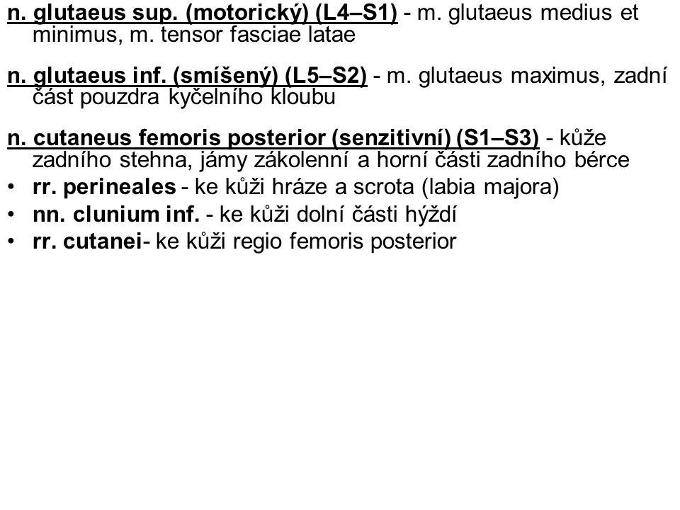 n. glutaeus sup. (motorický) (L4–S1) - m. glutaeus medius et minimus, m. tensor fasciae latae