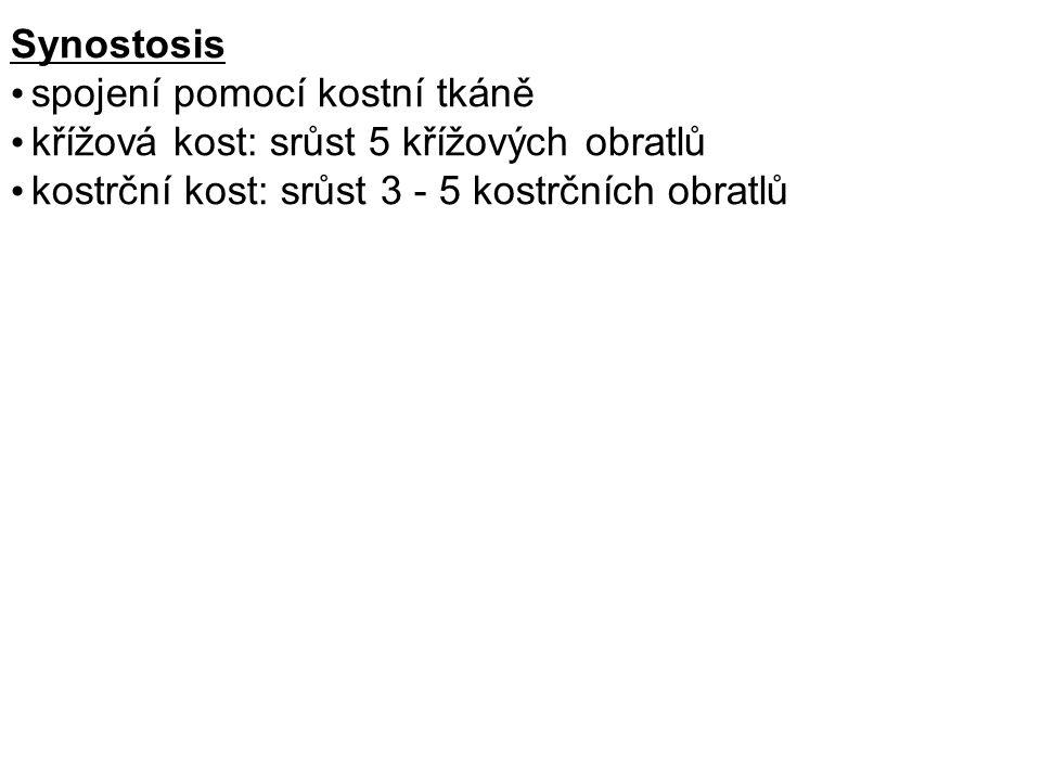 Synostosis spojení pomocí kostní tkáně. křížová kost: srůst 5 křížových obratlů.