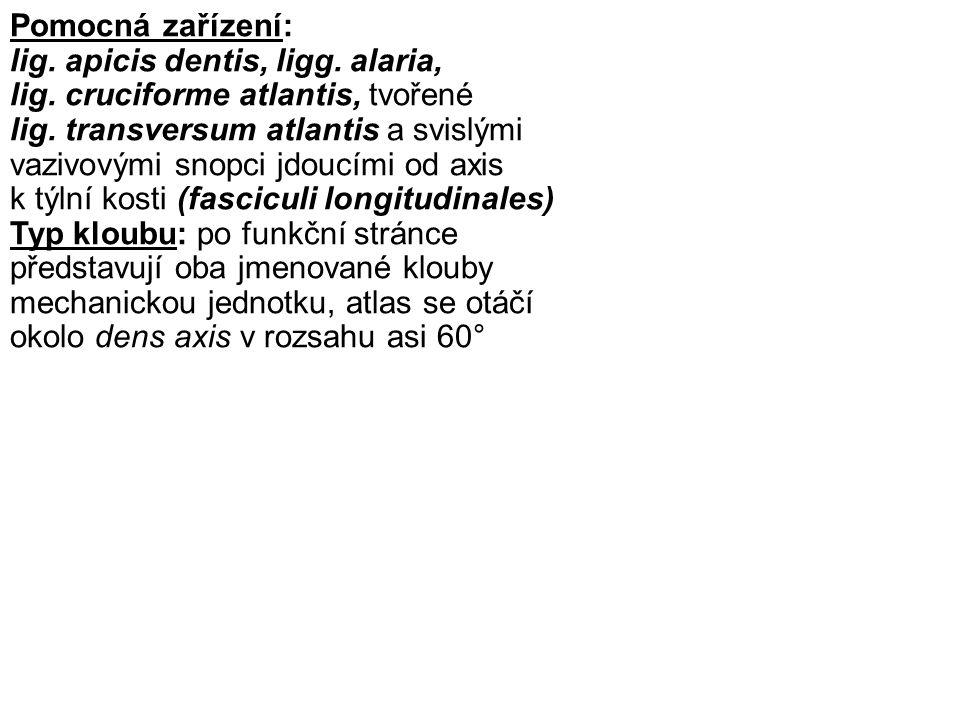 Pomocná zařízení: lig. apicis dentis, ligg. alaria, lig. cruciforme atlantis, tvořené.