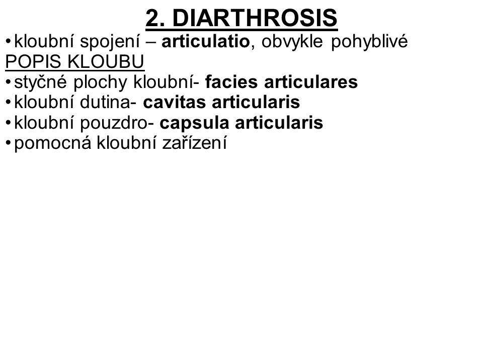2. DIARTHROSIS kloubní spojení – articulatio, obvykle pohyblivé