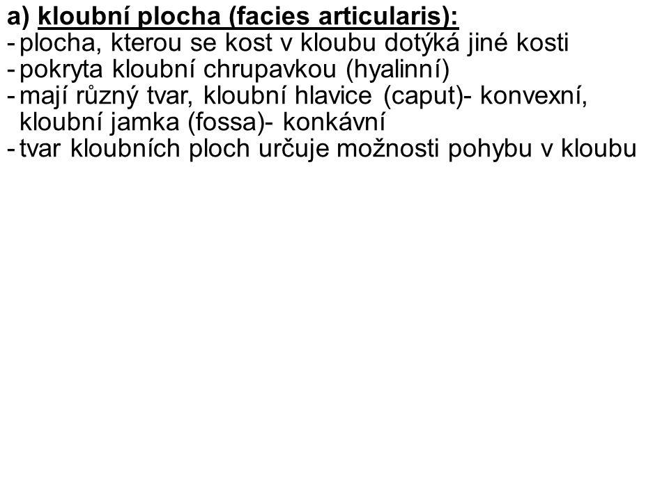 a) kloubní plocha (facies articularis):