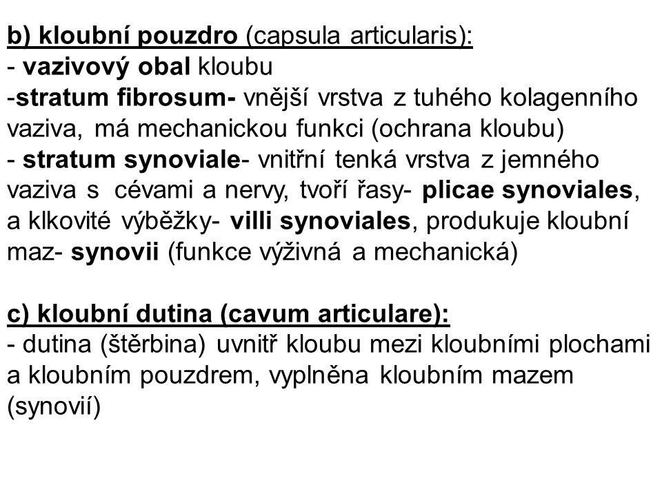 b) kloubní pouzdro (capsula articularis):
