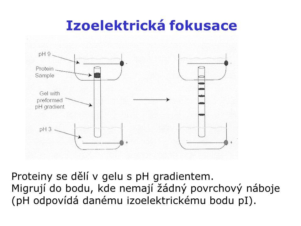Izoelektrická fokusace