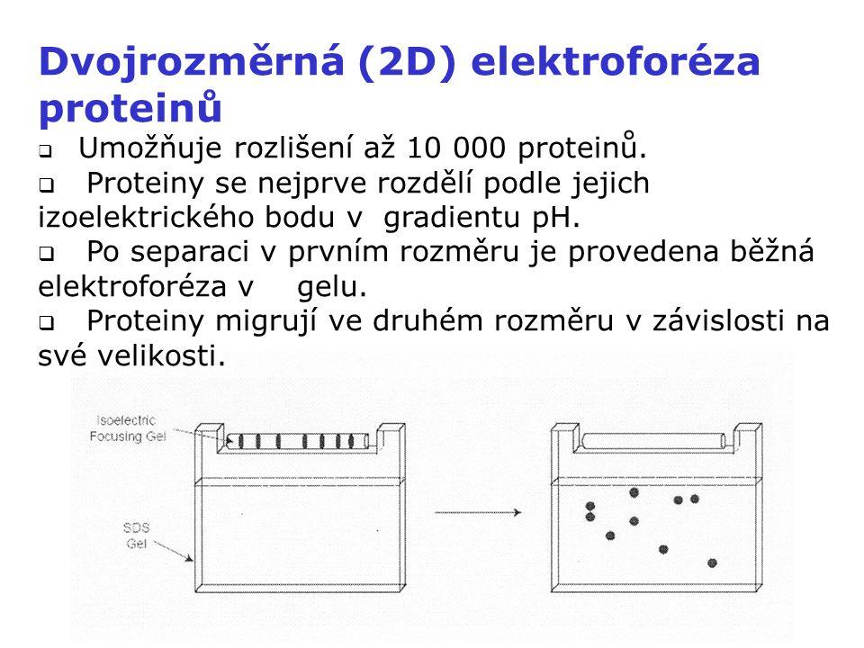 Dvojrozměrná (2D) elektroforéza proteinů