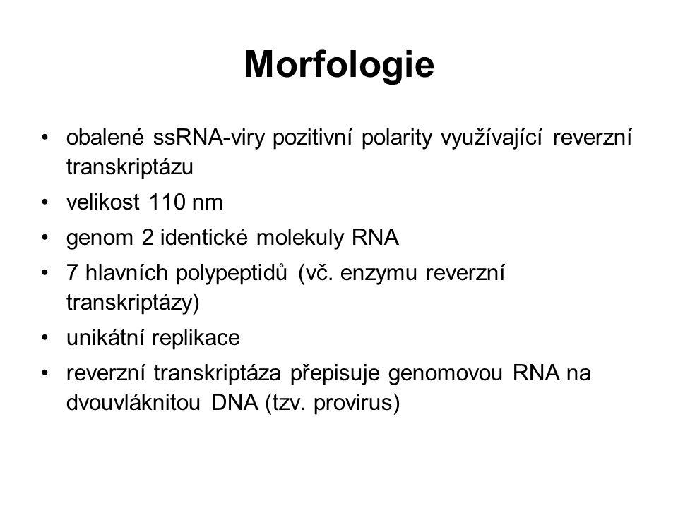 Morfologie obalené ssRNA-viry pozitivní polarity využívající reverzní transkriptázu. velikost 110 nm.