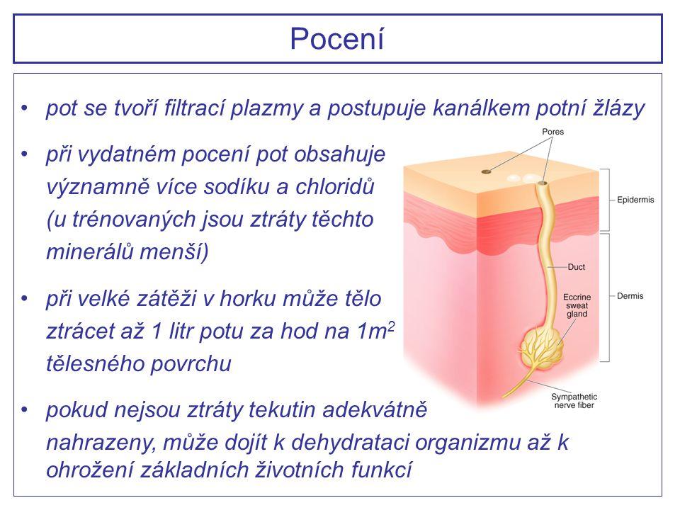Pocení pot se tvoří filtrací plazmy a postupuje kanálkem potní žlázy