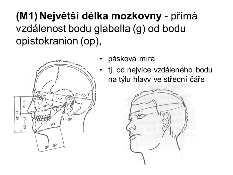(M1) Největší délka mozkovny - přímá vzdálenost bodu glabella (g) od bodu opistokranion (op),