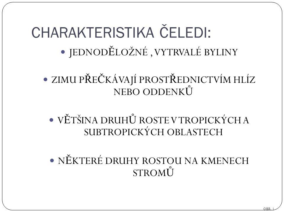 CHARAKTERISTIKA ČELEDI: