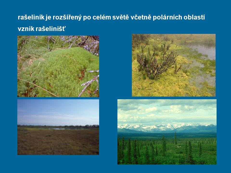 rašeliník je rozšířený po celém světě včetně polárních oblastí