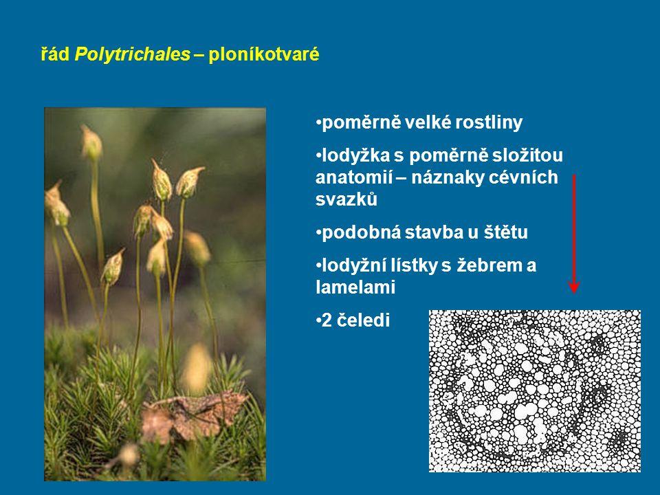 řád Polytrichales – ploníkotvaré