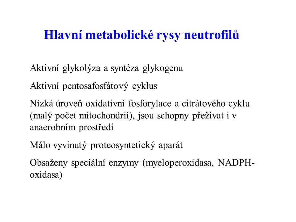 Hlavní metabolické rysy neutrofilů