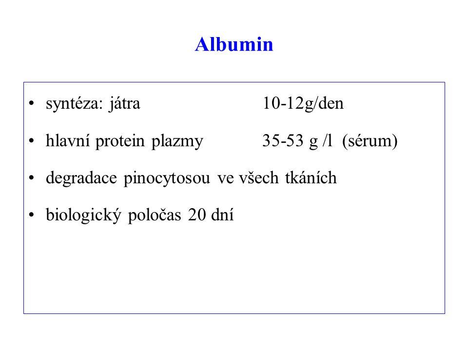 Albumin syntéza: játra 10-12g/den