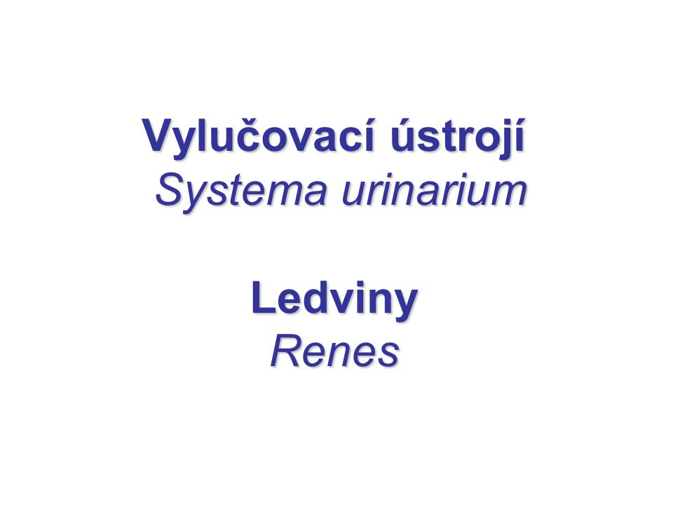 Vylučovací ústrojí Systema urinarium Ledviny Renes