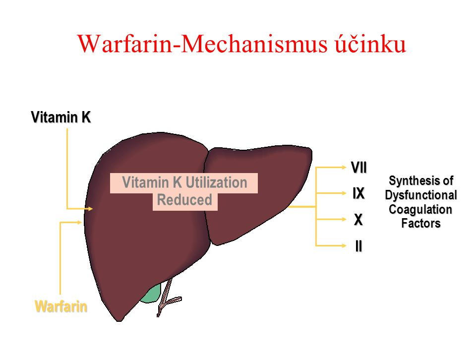 Warfarin-Mechanismus účinku