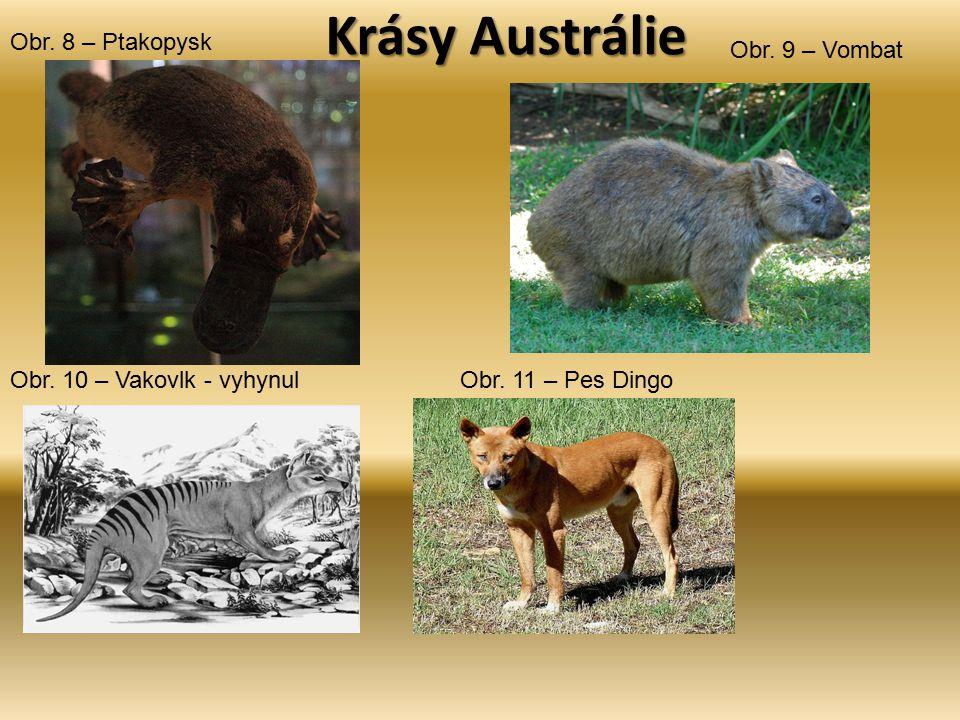 Krásy Austrálie Obr. 8 – Ptakopysk Obr. 9 – Vombat