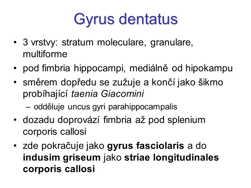Gyrus dentatus 3 vrstvy: stratum moleculare, granulare, multiforme